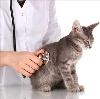 Ветеринарные клиники в Колпино